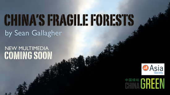 china-fragile-forests