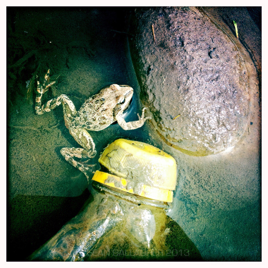 A frog swims next to a discarded plastic bottle in a pond in the town of Sershul, Sichuan Province. 2012