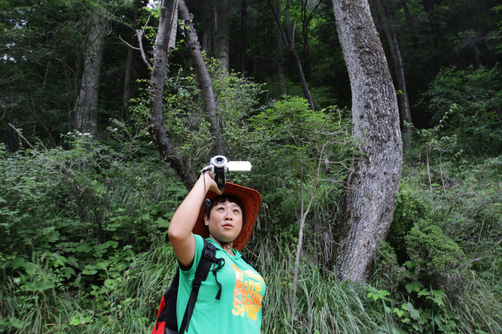 A tourist walks through some of the temperate forest that make up most of the vegetation cover in the Jiuzhaigou National Park.