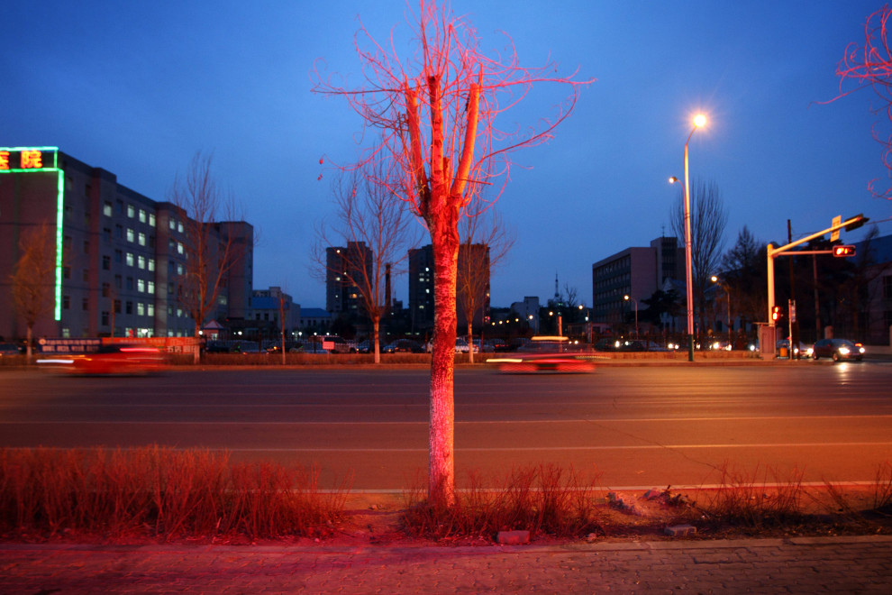 A tree lit up at night in the town of Yanji, close to the border with North Korea.