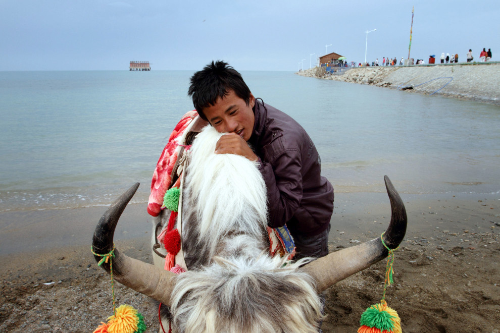 A Tibetan teenager and his yak on the shores of Qinghai Lake.