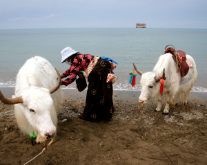 Qinghai's Troubled Soul