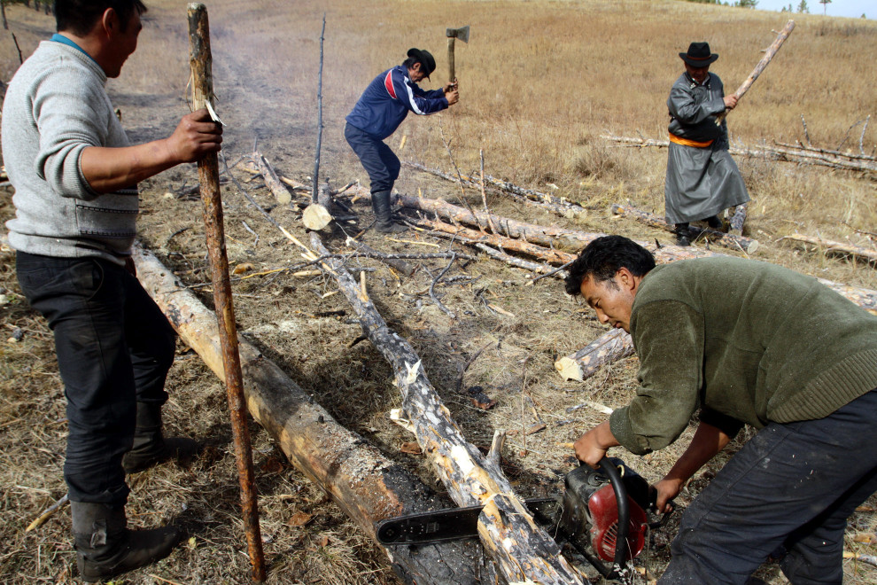 Members of the Khargistai-Bayanburd Forest User Group cutting up trees before loading them on to vehicles.