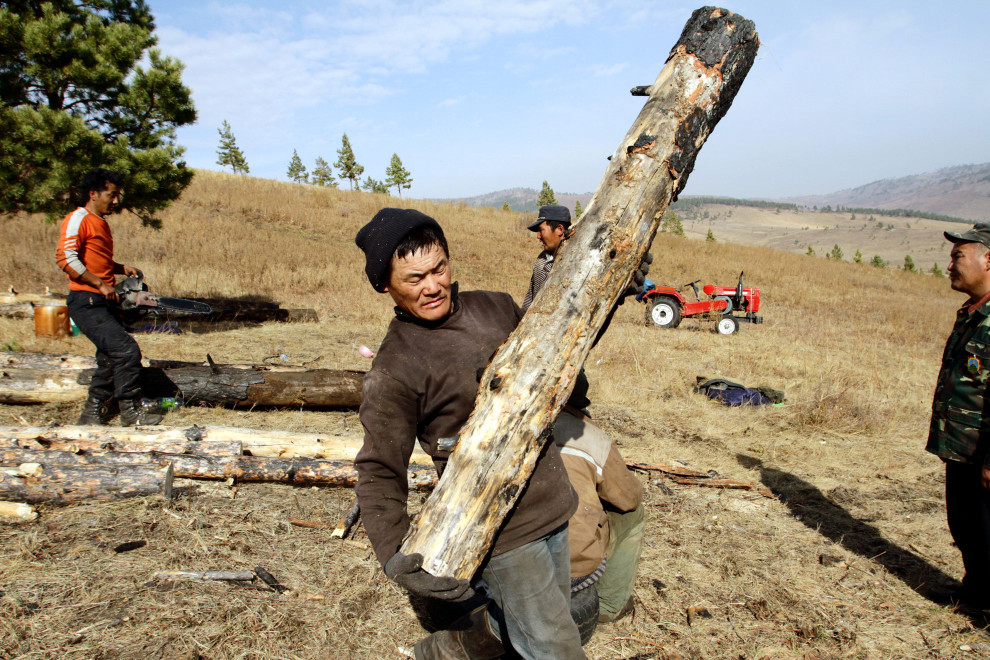 Members of the Khargistai-Bayanburd Forest User Group moving felled tress.