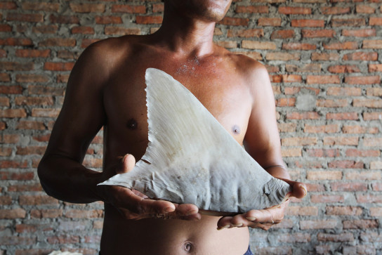 "Photographing In Jakarta's ""Shark Graveyard"" – Indonesia"
