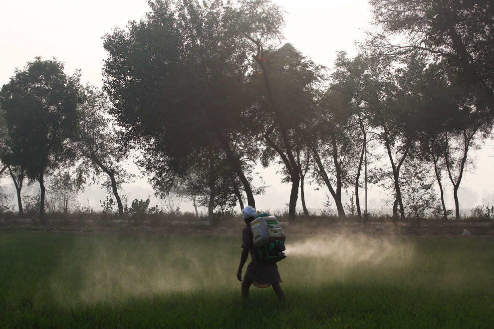 A man sprays pesticides on a field in the Punjab region of northwest India. Scientists believe that excessive pesticide use in the region over the past 30-40 years has led to the accumulation of dangerous levels of toxins such as uranium, lead and mercury which are contributing to increased health problems in rural communities.