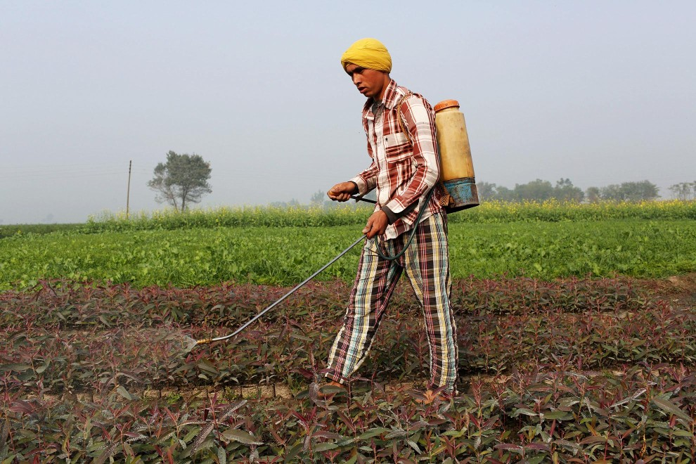 A farmer sprays pesticides onto crops in the Malwa region of Punjab. Increased use of pesticides and insecticides has helped increase crop yields however it has also led to sever health issues in local communities.