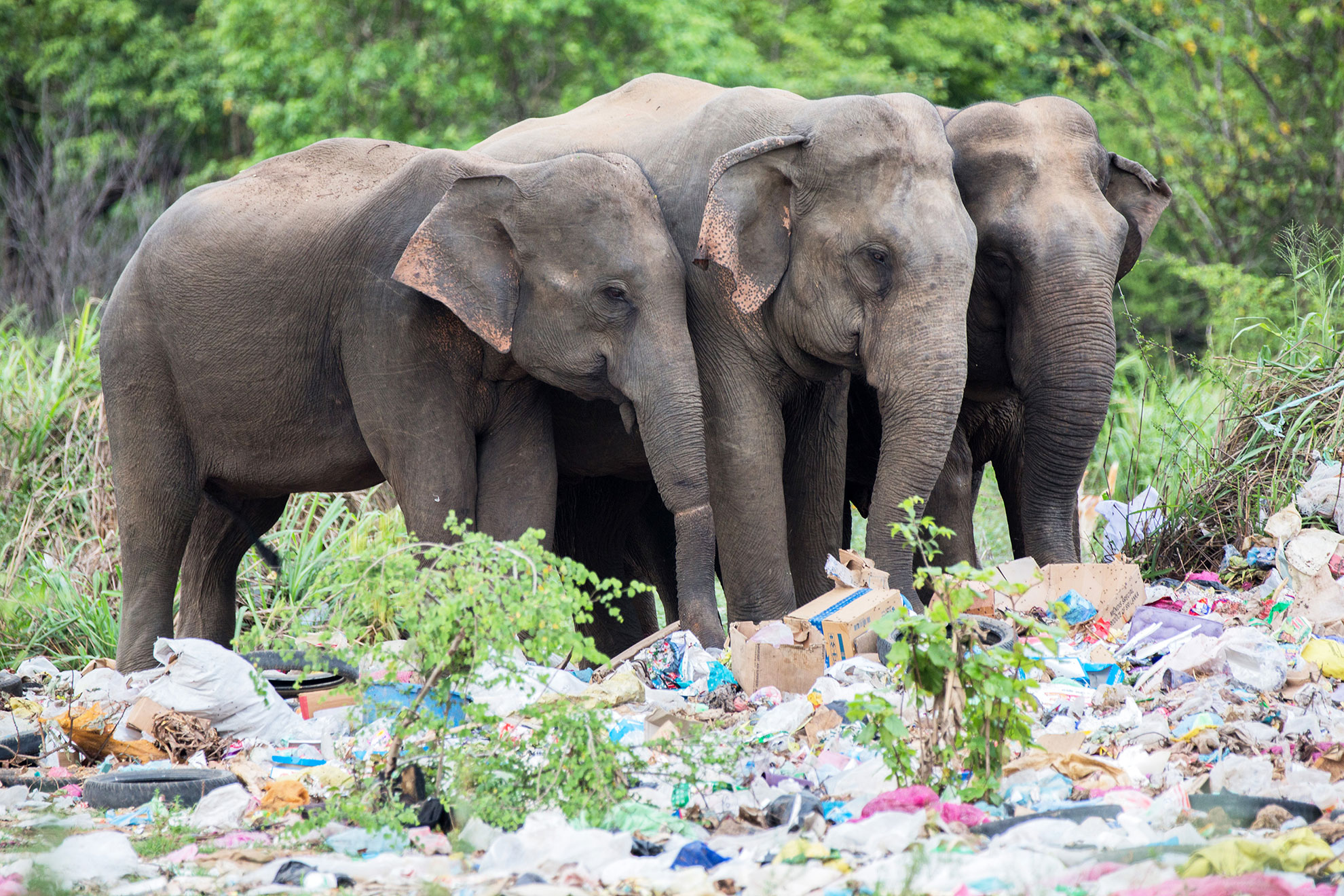 human elephant conflict The human-elephant conflict has existed since people started invading the habitats of elephants causing them to invade the villages and areas where people live, in search of adequate food.