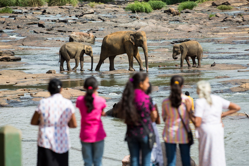 People watch elephants in a river at the Pinnawala Elephant Orphanage in Sri Lanka.