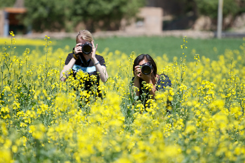 Workshop participants taking pictures in a rapeseed field.