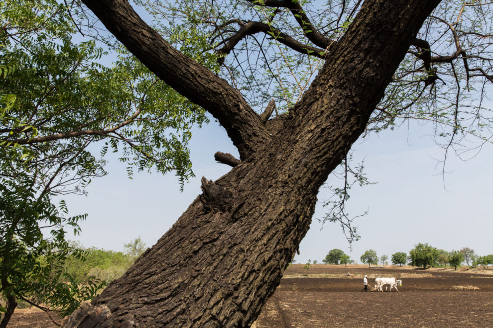 A farmer ploughs his arid fields during the drought near the city of Latur.