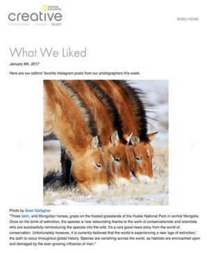 "National Geographic ""What We Liked"""