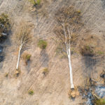 COVID-19 and Increased Deforestation in Cambodia