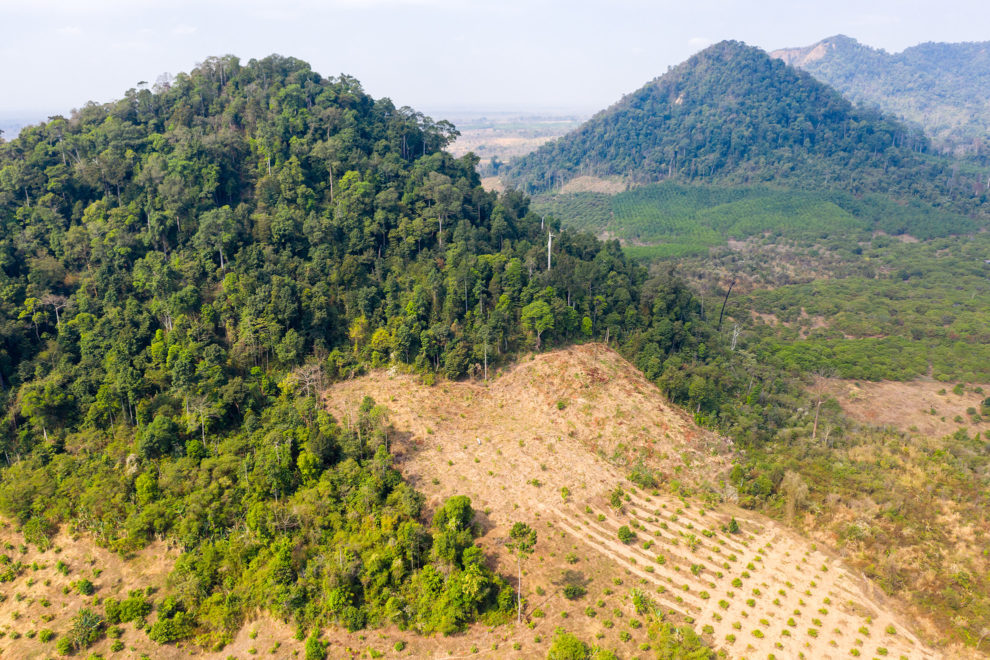 Cleared forests in Preah Vihear Province, in northern Cambodia near the border with Loas. Most of the land Cambodia's forests once occupied have been sold by the government for agricultural concessions.