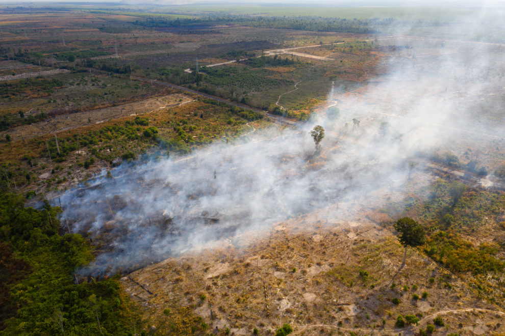 A burning field in the Beng Per Wildlife Sanctuary, in northern Cambodia. It is a sanctuary in name only as most of the land has been sold by the government for agricultural concessions.