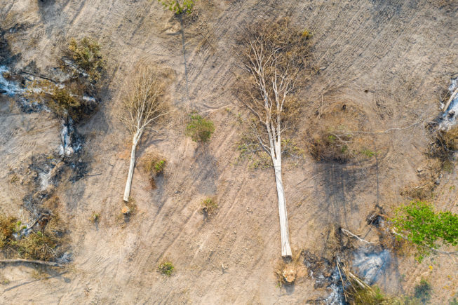 Aerial view of cut trees in the Beng Per Wildlife Sanctuary, northern Cambodia. Cambodia has one of the world's fastest rates of deforestation and it is estimated only 3% of primary forest is now left.