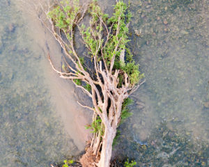 Fallen Forests of The Mekong