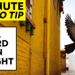 Photography Tips (in 1 Minute) – A Bird in Flight